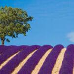 provence-frankrijk-lavendel
