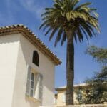 house palm blue sky 1200