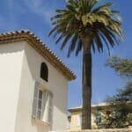 house palm blue sky 560