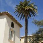 house palm blue sky 700 sq