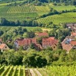Burgundy 2 560