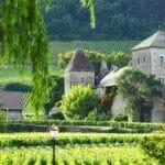 Burgundy 560