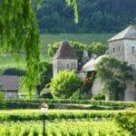 Burgundy 800