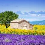 house yellow purple 2000