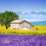 house yellow purple 800