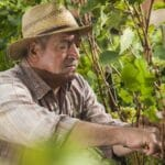 man in vineyard 560