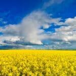 yellow blue landscape 1000
