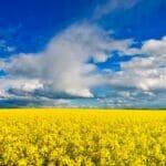yellow blue landscape 800