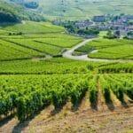 Gironde vynejard